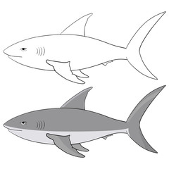 Shark. Outline and gray vector illustration isolated on white background