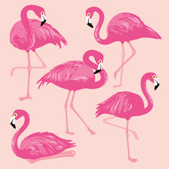 Poster Flamingo Vector set with pink flamingos. Hand Drawn illustration