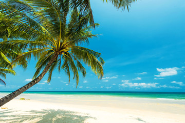 Beautiful tropical beach with coconut tree palm, located Koh Chang Island, Thailand