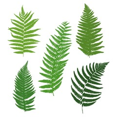 A set of silhouettes of ferns. Vector illustration.