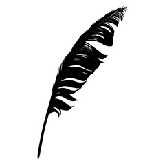 Silhouette black feather isolated on a white background. Vector.