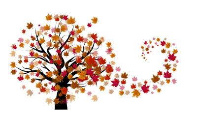 Autumn tree on a white background