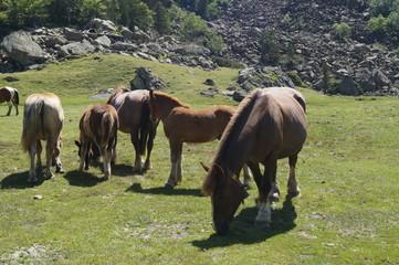 Pyrénées, lac, vaches, animaux, pics, montagne, Ossau, Gabas