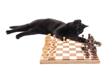 Black cat lying next to a chessboard, knocking down a knight, on white background