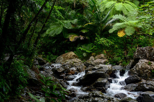 Mountain river in the El Yunque national forest, Puerto Rico