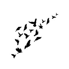 Silhouettes a flock of birds. Vector illustration. Isolated on white background. Freehand drawing