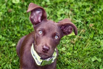 Kleiner pfiffiger Hund