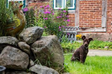 Kleiner Hund im Cottage Garden