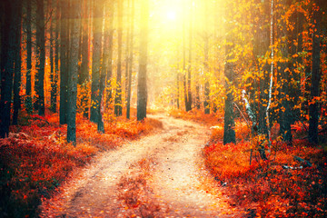 Autumn scene. Beautiful autumnal park with pathway. Fall nature scene