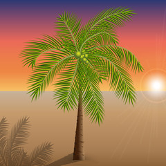Vector illustration of a palm tree in the desert on the Sunset.