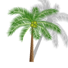 Vector illustration of a palm tree on a transparent background