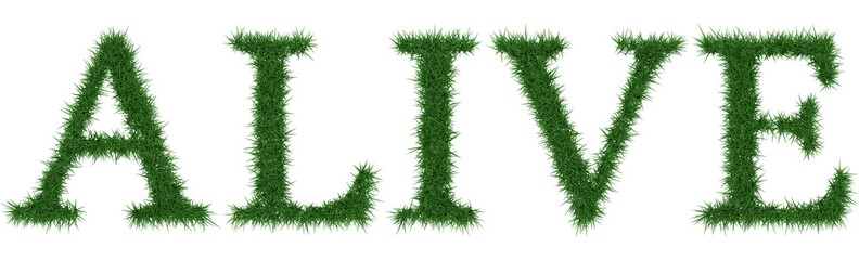 Alive - 3D rendering fresh Grass letters isolated on whhite background.
