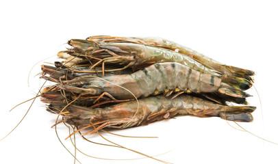 fresh shrimp isolated
