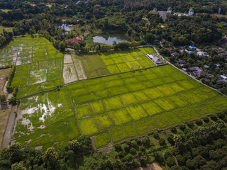 Aerial top view photo from flying drone of green paddy rice fields in the country region of Chaing Mai, Thailand