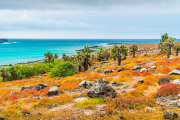 Tropical Galapagos Sea Landscape View. Isolated Blue Background. Ocean Beach, Blue Sky, Beautiful Panoramic Landscape. Abstract Beach Ocean Background. Tropical Forest View. Red, Green, Blue Island