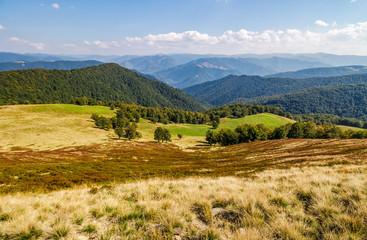 grassy meadow on a hillside in autumn