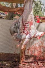 Muslim butcher man stipping a sheep for Eid Al-Adha (Sacrifice Feast).