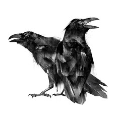 painted sitting bird crows on a white background