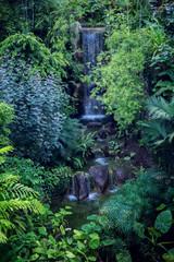 Wasserfall in Urwald