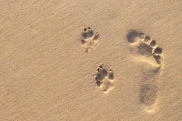 Human footprint beside dog footprint on the tropical beach