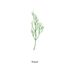 Handpainted watercolor poster with fennel