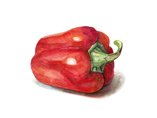 hand painted watercolour sweet pepper on white background