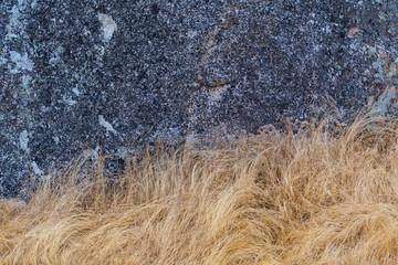 Brown Grass Underneath Gray Stone