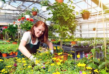 Gärtnerin in einem Gewächshaus mit bunten Blumen - Pflanzenhandel