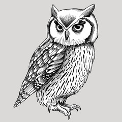 Owl Graphic Black & White