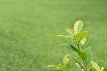 Green tree, white back ground