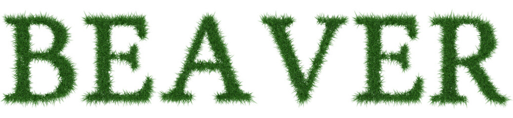 Beaver - 3D rendering fresh Grass letters isolated on whhite background.