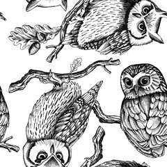 Seamless pattern with image owls on a oak branches. Vector black and white illustration.