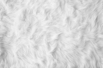 White cotton wool carpet background texture