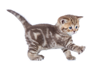 Papier Peint - Baby cat walking side view isolated