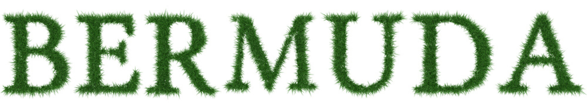 Bermuda - 3D rendering fresh Grass letters isolated on whhite background.