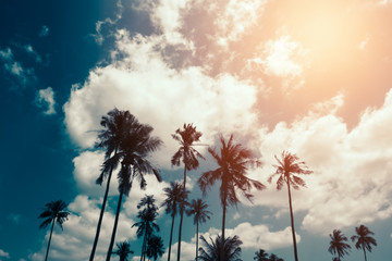 Silhouette of coconut palm trees with sky and cloud background. Vintage color style.