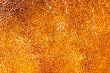 Old aged camel leather background. Texture, scratched, gradient yellow brown vivid colors. Creased.