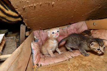 cat mom and small kitten sucking milk