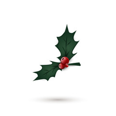 Holly berry leaves isolated. Christmas symbol. Vector illustration