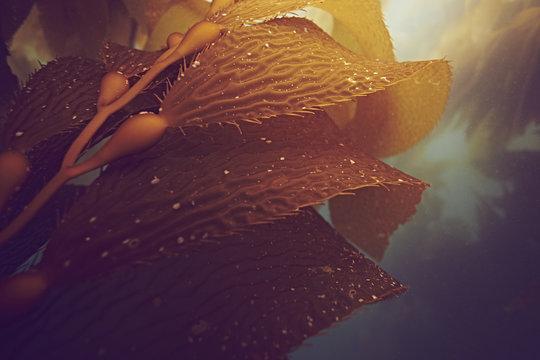 Close up of cali kelp