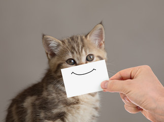 Papier Peint - funny cat portrait with smile on cardboard