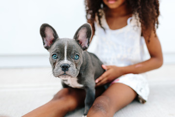 A little girl holding a french bulldog puppy