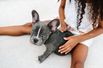A little girl petting a french bulldog puppy