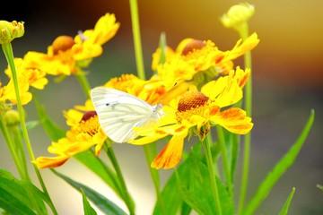 Grußkarte - Schmetterling auf Blüte