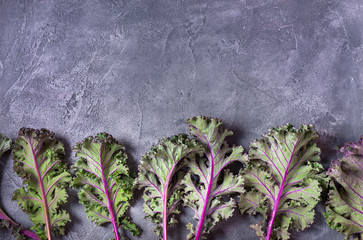 Red kale leaves or Russian kale on gray background with copy space