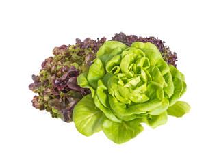 Bunch of lettuce salad