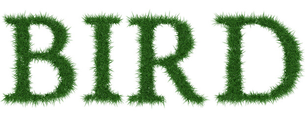 Bird - 3D rendering fresh Grass letters isolated on whhite background.