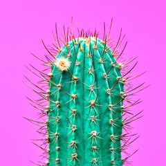 Cactus Fashion Design. Minimal fashion Stillife. Trendy Bright Colors. Green Neon Cactus Mood on Pink background