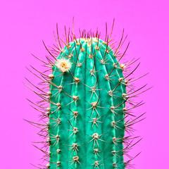 Photo sur Aluminium Cactus Cactus Fashion Design. Minimal fashion Stillife. Trendy Bright Colors. Green Neon Cactus Mood on Pink background