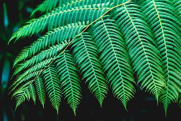 Fern leaves texture on dark background